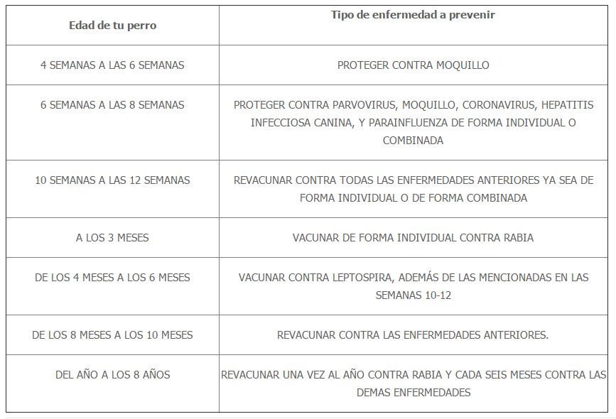Calendario Perruno.Calendario De Vacunacion Perruno Perros Pug